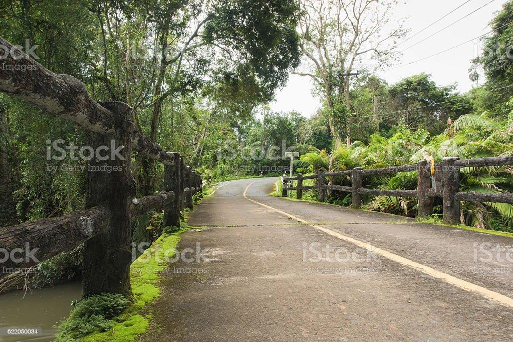 Concrete bridge in the forest stock photo