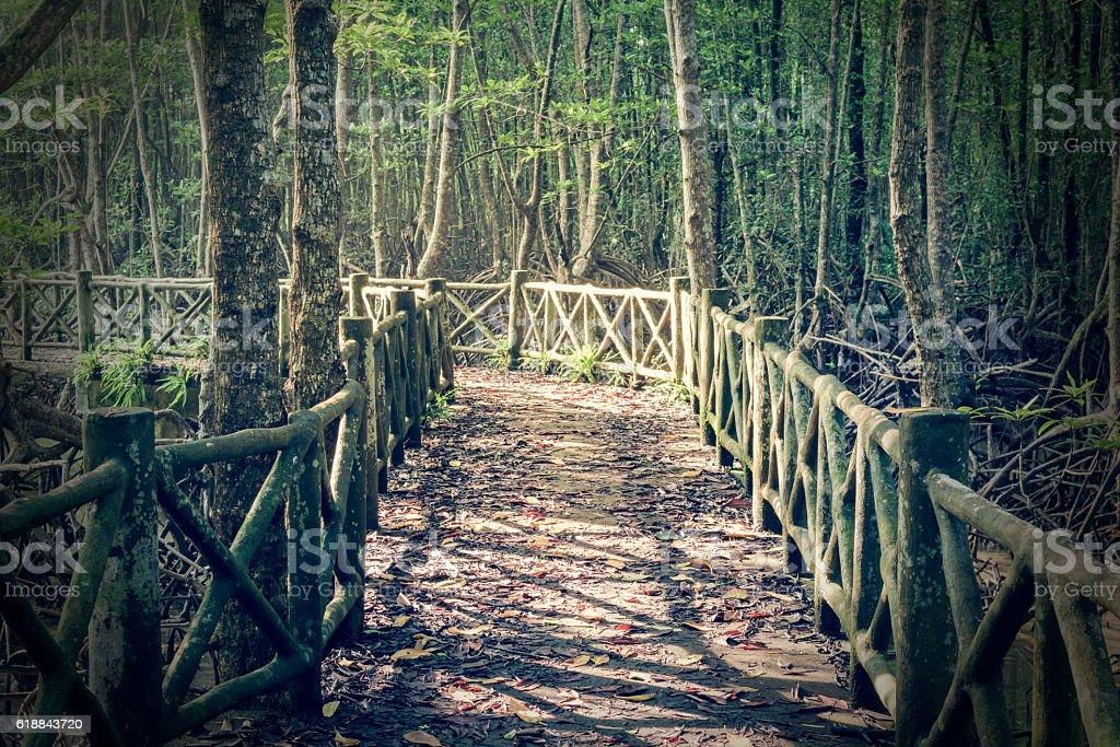 Concrete bridge leading to mysterious swamp forest stock photo