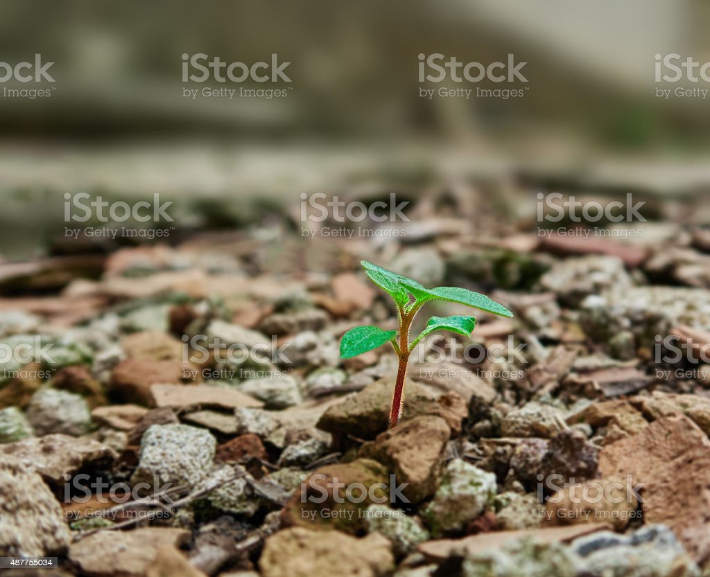 Concrete debris and plant royalty-free stock photo