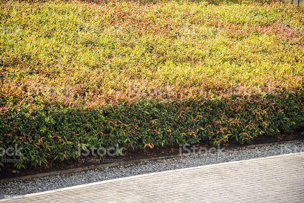 concrete edge seperate between shrub and pebble stock photo