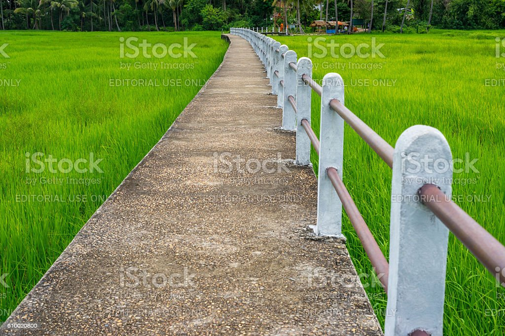 Concrete elevated walkway in green rice field in Ubonratchathani, Thailand photo libre de droits