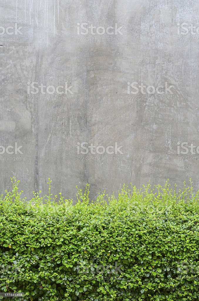 Concrete floor with green leaves royalty-free stock photo