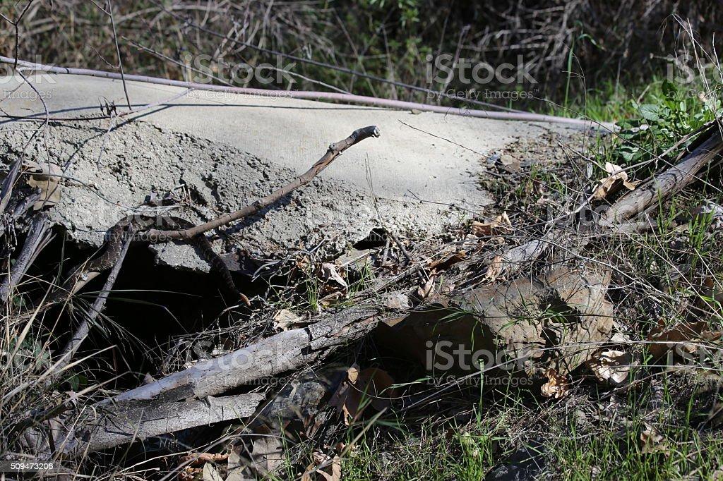 Concrete jungle stock photo