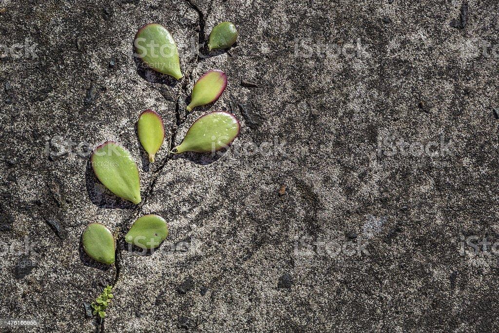 Concrete nature evolution royalty-free stock photo