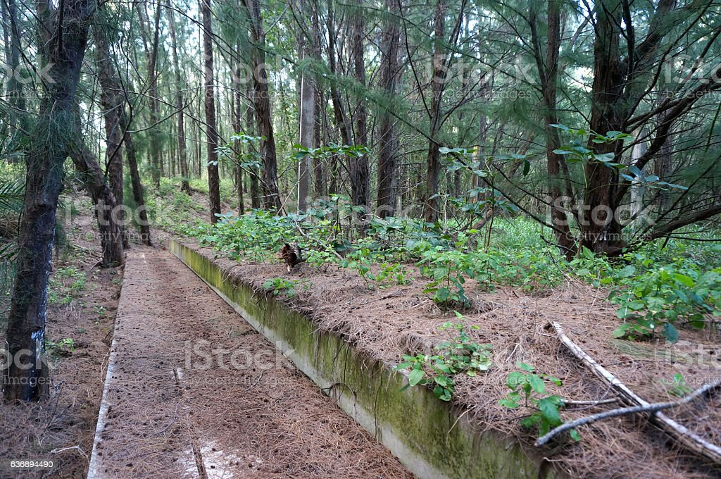 Concrete Path in Forest stock photo