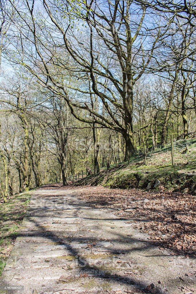 Concrete Path Through Woodland stock photo