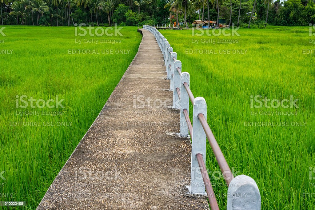 Concrete pathway through green rice field in rural area. photo libre de droits