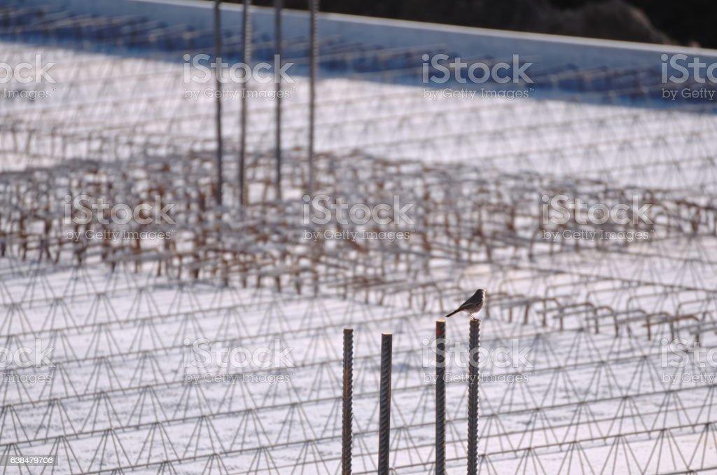 Concrete Reinforcement and Bird stock photo