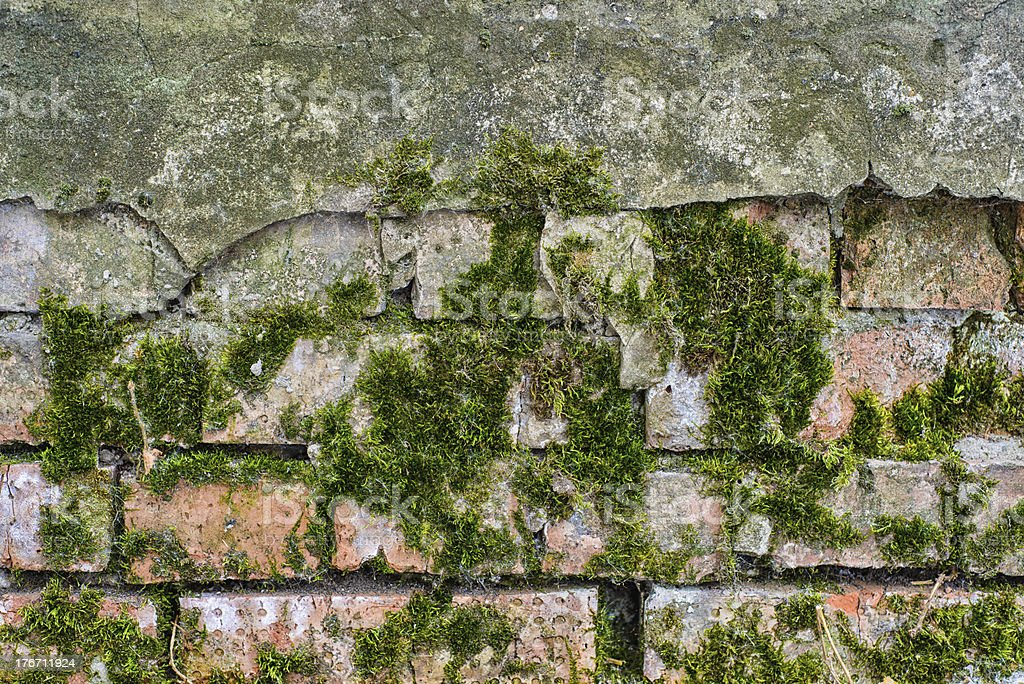 Concrete wall with moss royalty-free stock photo
