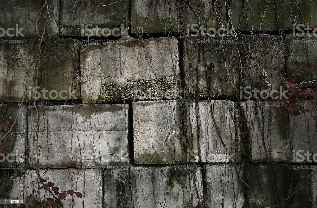 Concrete Wall with Vines royalty-free stock photo