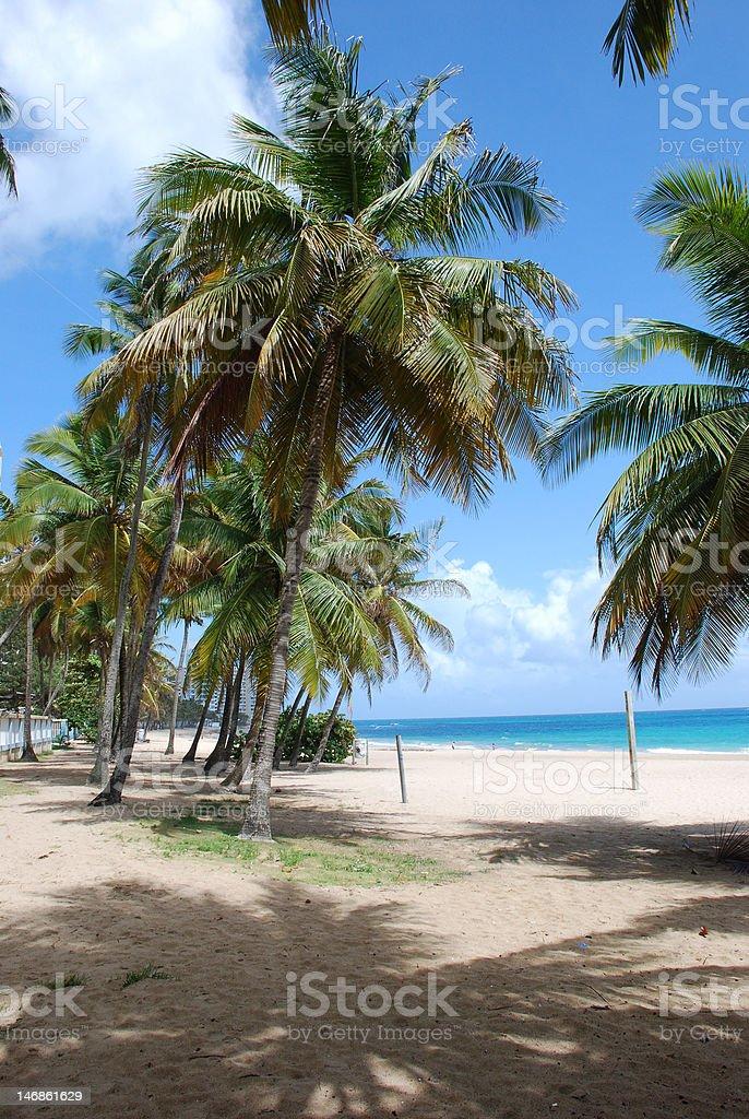 Condado Beach Palm Trees stock photo