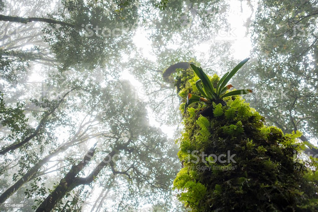 Condition of the forest in the rain forest. stock photo