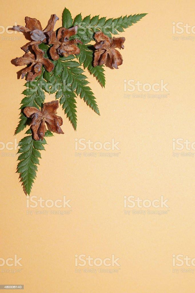 Cones enupar and fern stock photo
