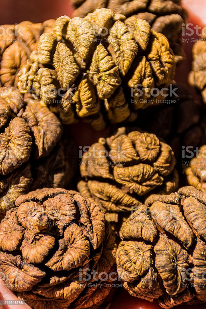 Cones of Giant Sequoia Tree, Giant Forest, California USA stock photo