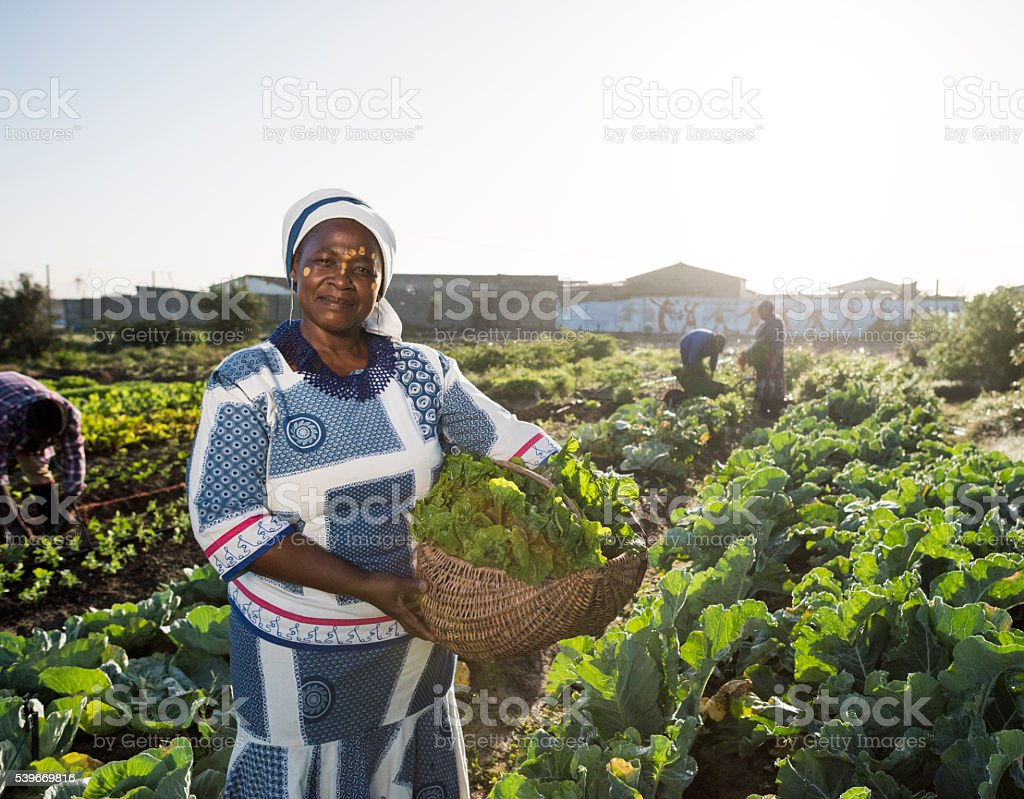 Confident African woman in vegetable garden stock photo