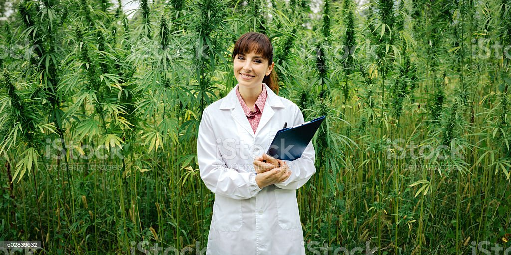 Confident doctor posing in a hemp field stock photo