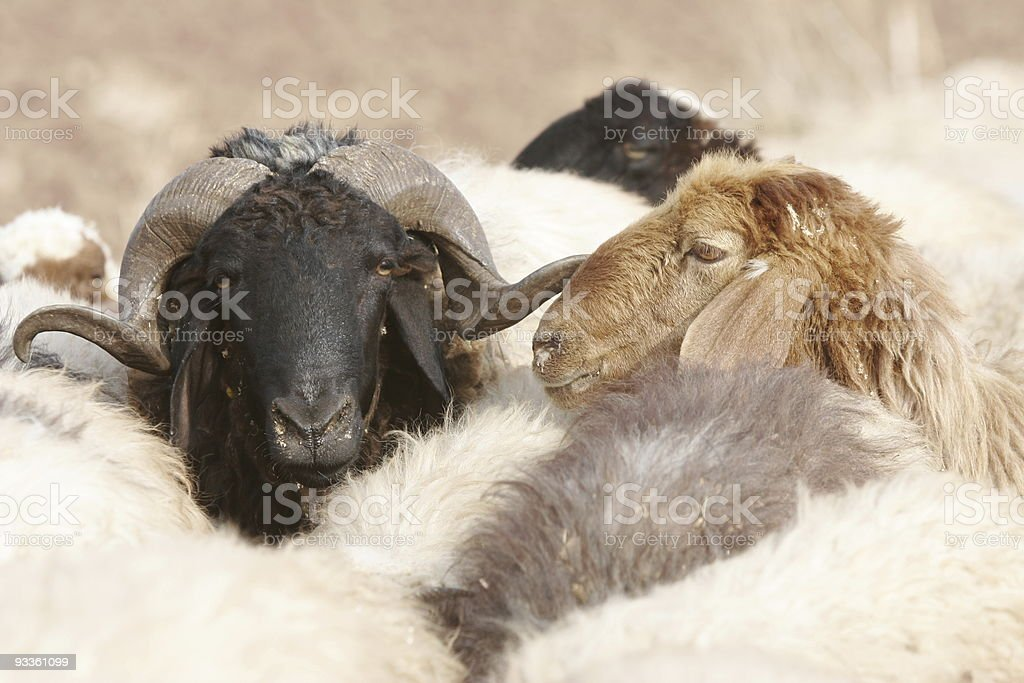 Confident Leader royalty-free stock photo
