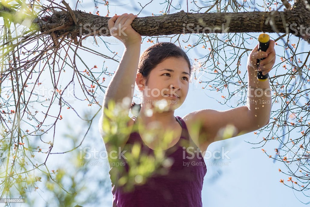 Confident, Teenaged, Mixed-Ethnic Girl Pruning Tree Branch with Hand Saw stock photo
