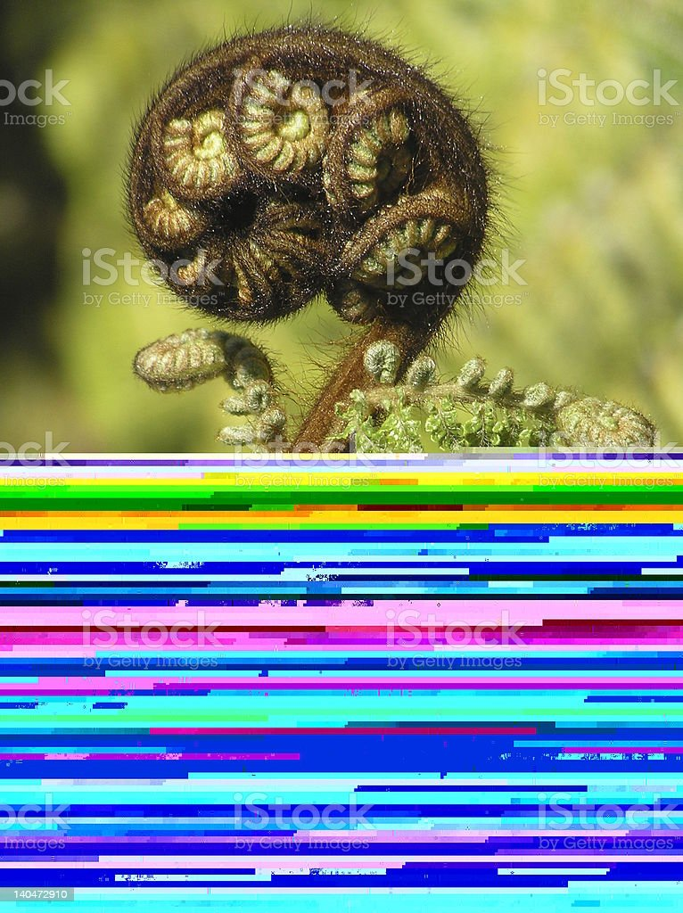 Confused Orangutan stock photo