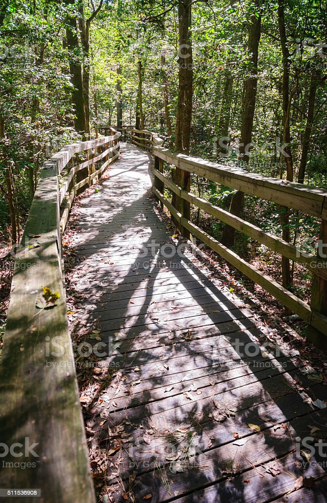 Congaree National Park stock photo