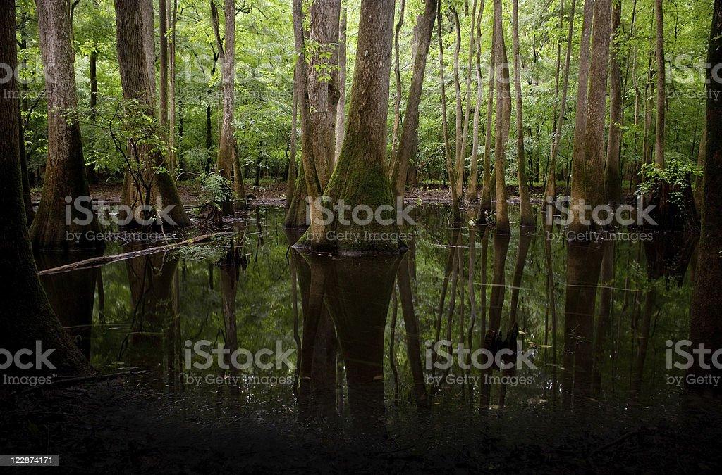 Congaree Swamp South Carolina stock photo