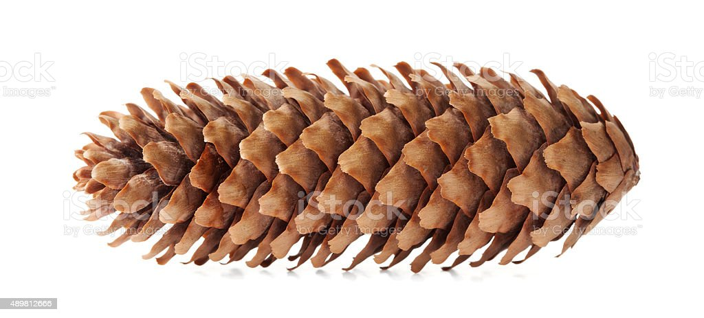 Conifer cone, fir cone or fir apple on white background stock photo