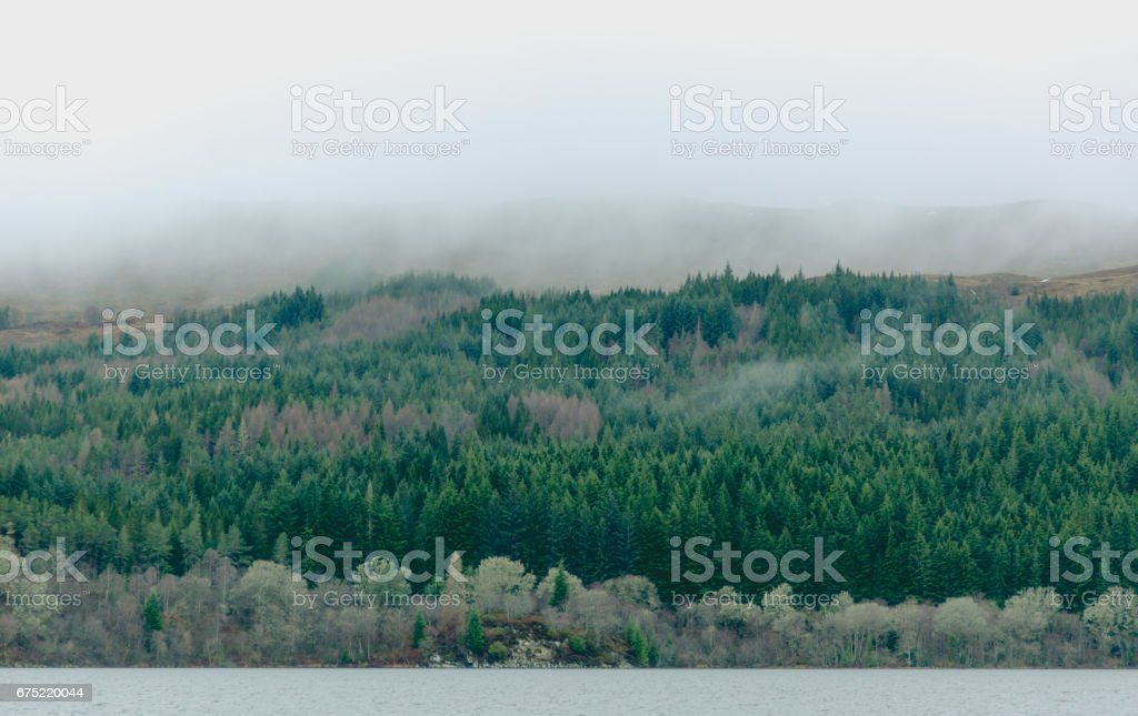 Coniferous forest at hill with fog flying over at Loch Ness in Scotland stock photo