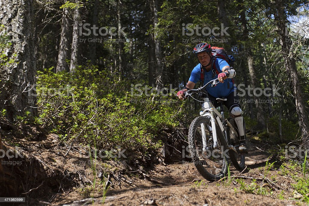 Coniferous forest downhill, South Tyrol stock photo