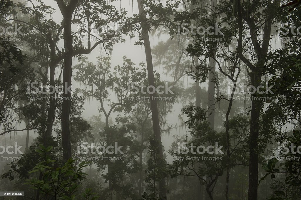 Coniferous forest on a misty autumn morning. stock photo