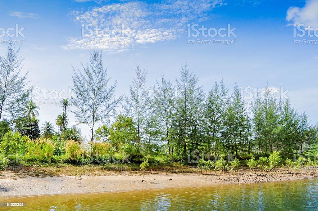 Coniferous Tree stock photo