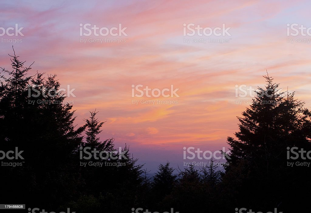 Coniferous trees silhouetted at dusk royalty-free stock photo