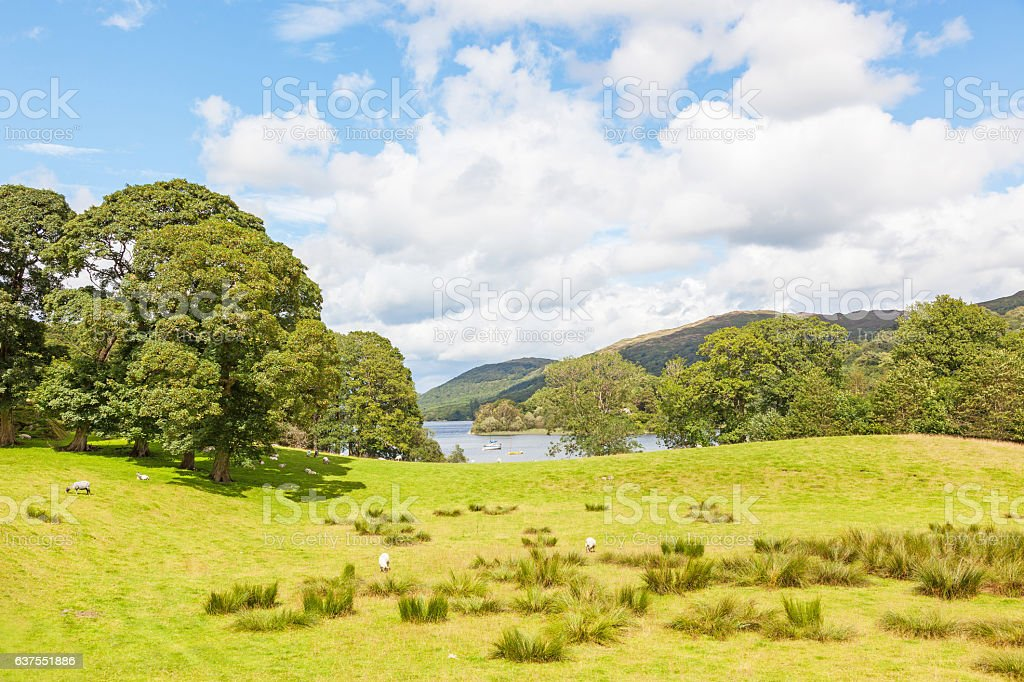 Coniston Water Meadow stock photo
