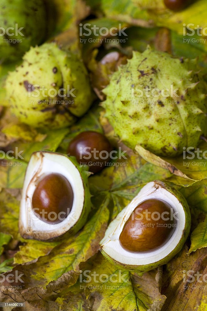 Conkers and Chestnut Leaves stock photo