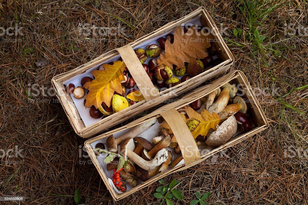 conkers mushrooms rowen foraging  -  autumn harvest stock photo