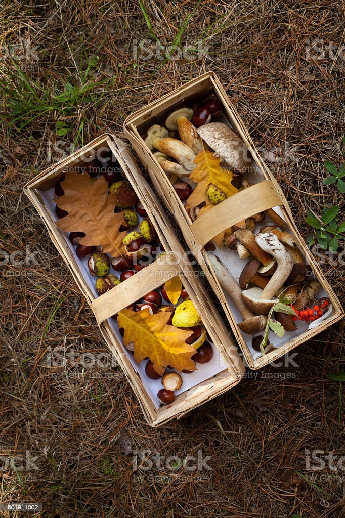 conkers mushrooms rowen foraging  -  autumn harvest stock photo