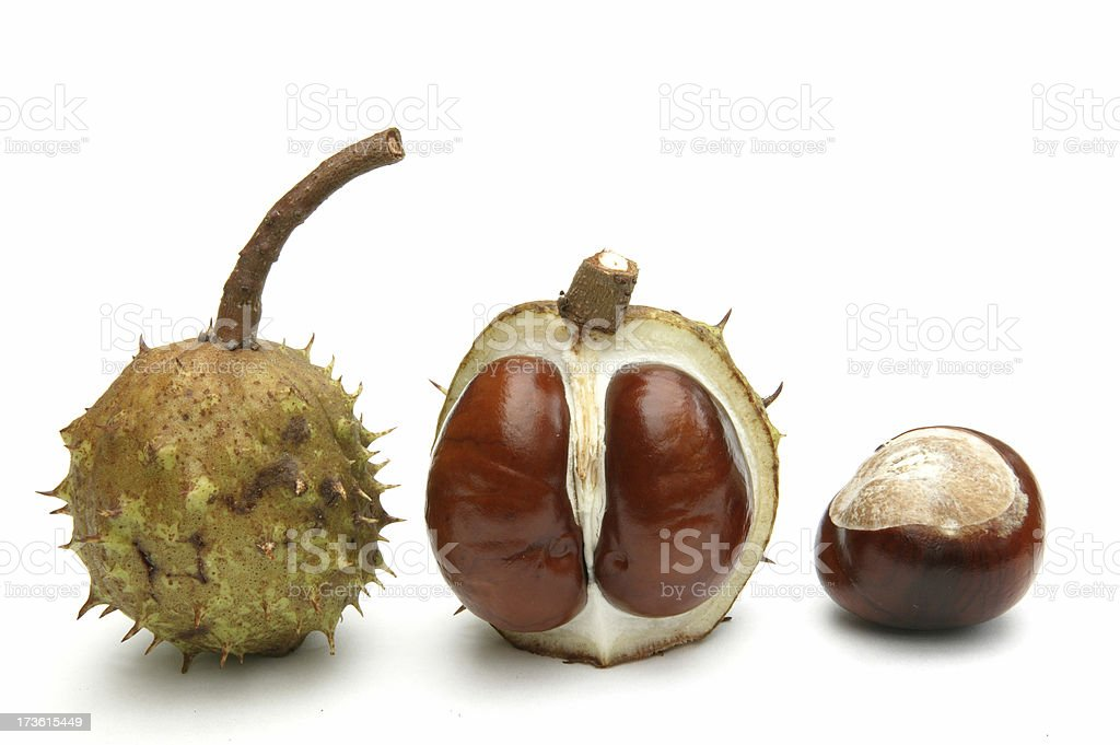 Conkers on parade stock photo