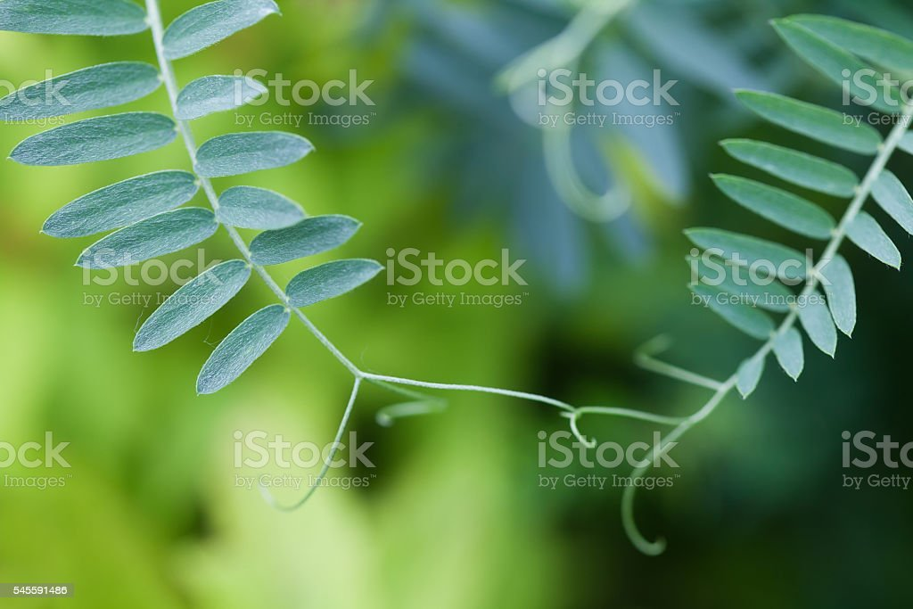 Connection concept image. Two interconnected plants with green leaves. Soft stock photo