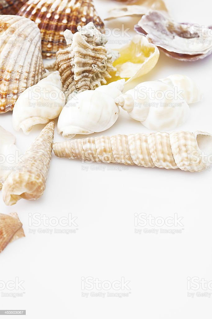 Connus and shells. stock photo