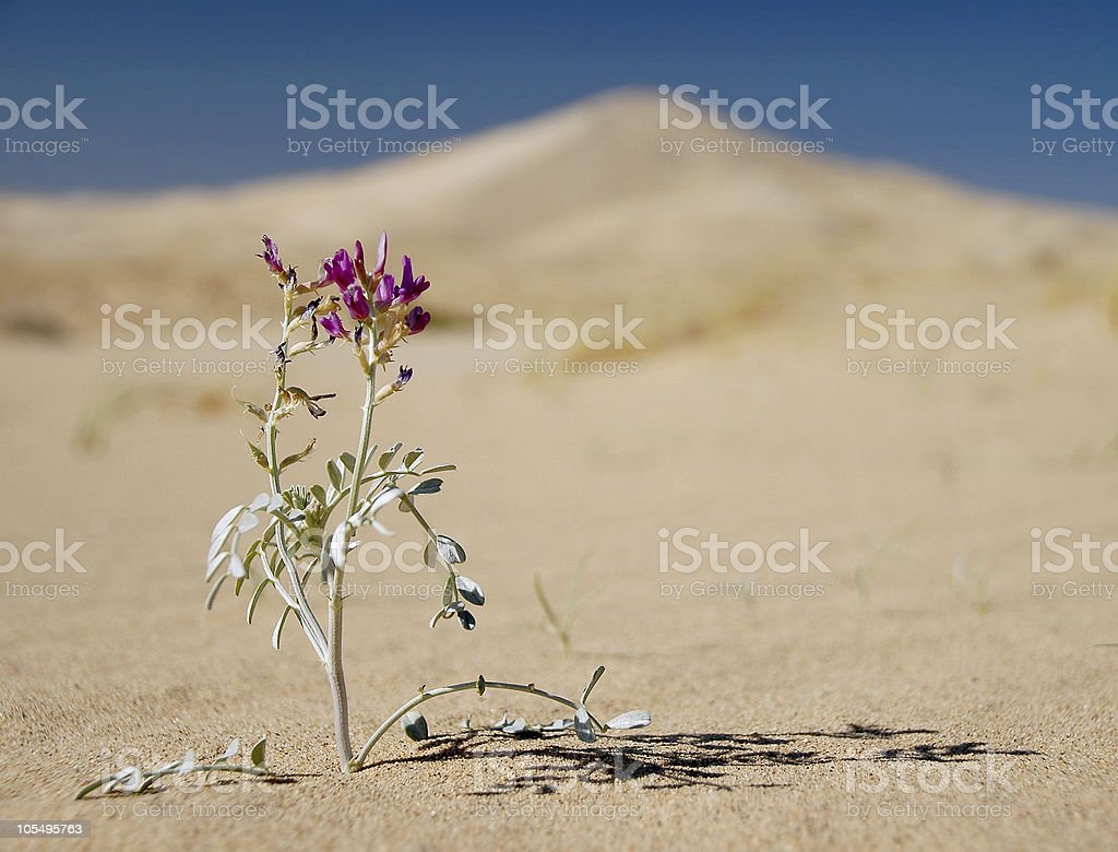 Conquering Adversity in Sand Dunes stock photo