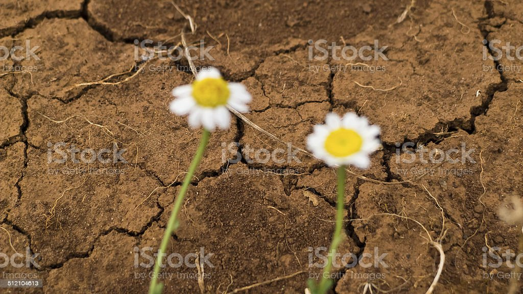 Consequence of the climate. stock photo