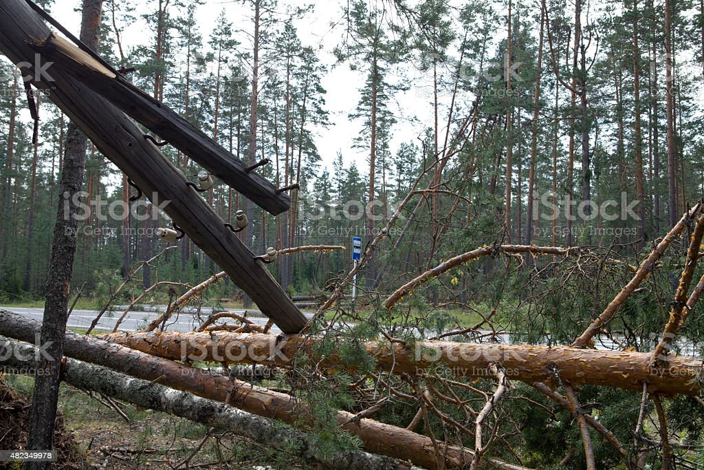 Consequences of hurricane 'Asta', Russia. stock photo