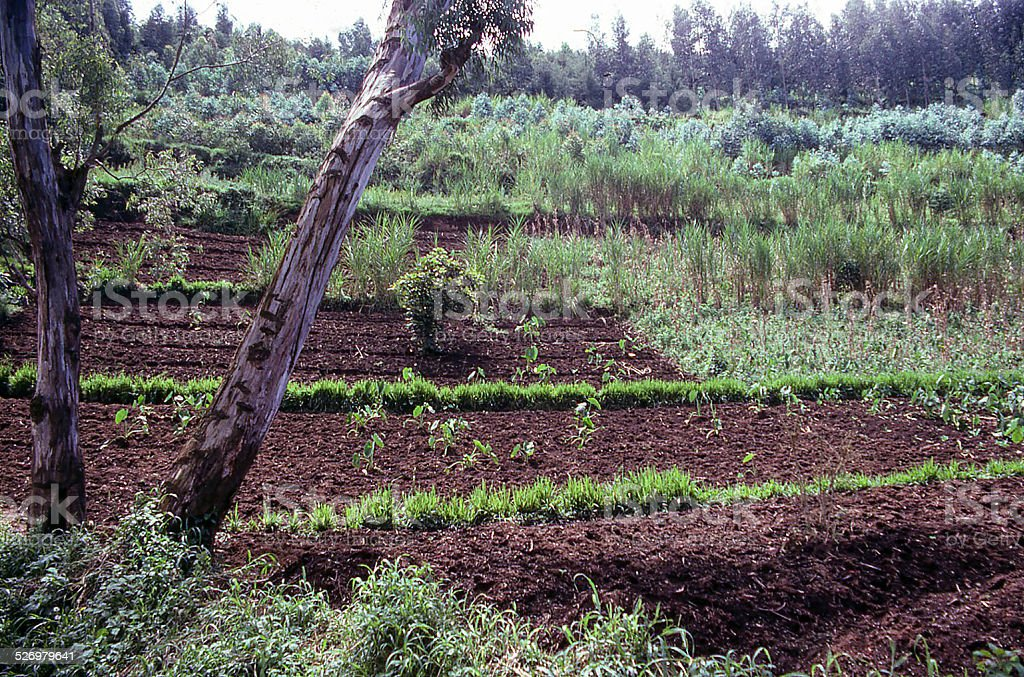 Conservation Agriculture and Agroforestry on Steep Slopes northwest Rwanda Africa stock photo