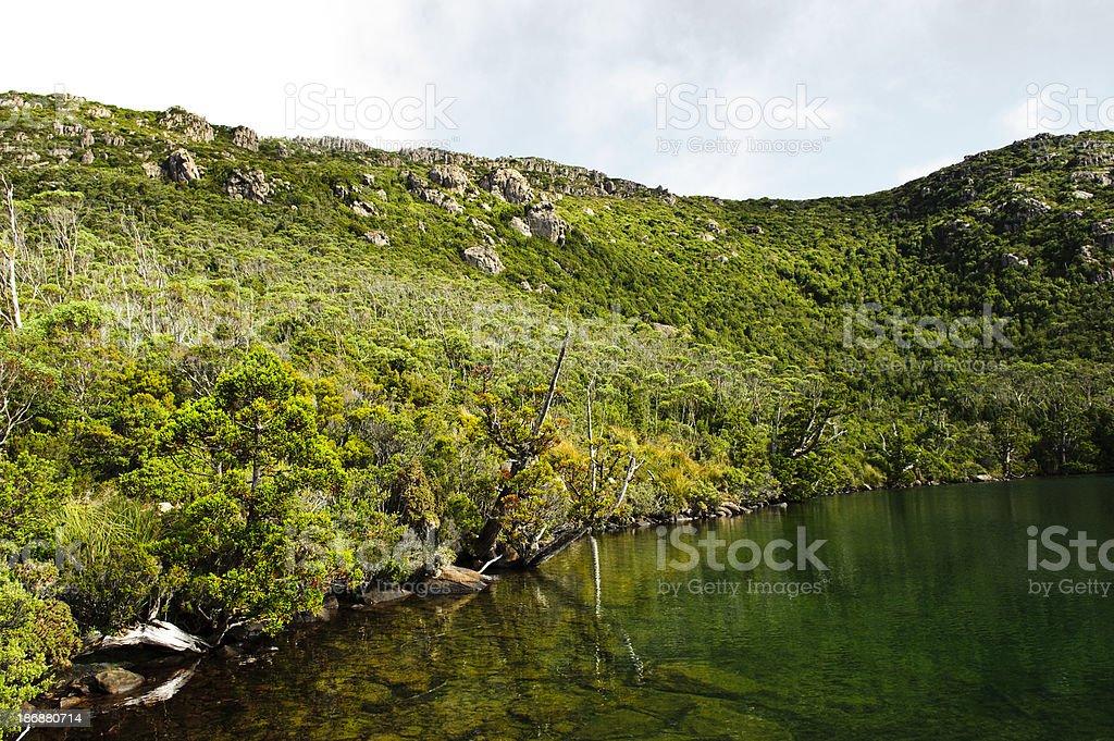 Conservation park lake wild grass tree Hartz mountains Tasmania royalty-free stock photo