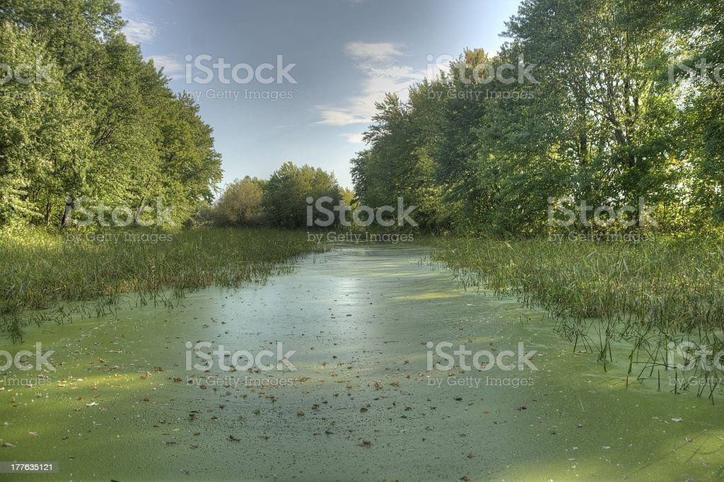 Conservation wetland ecosystem with green tall grass Berthierville Quebec Canada royalty-free stock photo