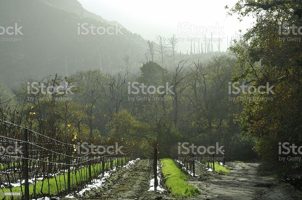 Consntantia Winefields stock photo
