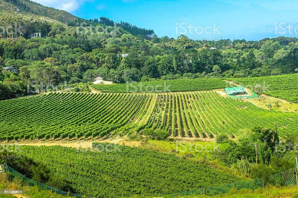 Constantia Wine Valley stock photo