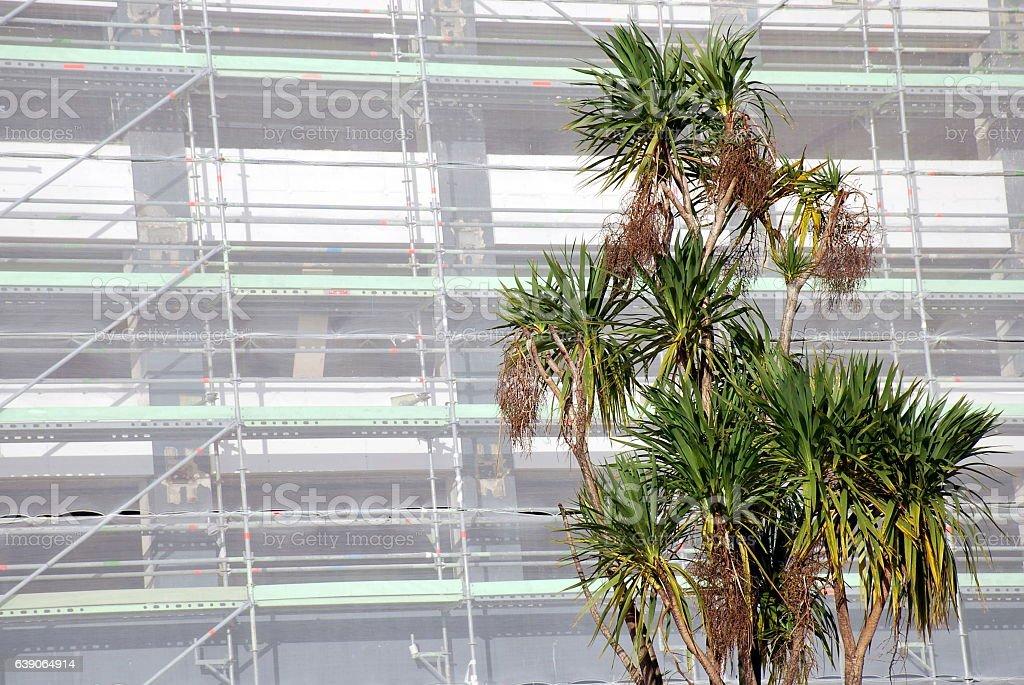 Construction Background with Cabbage Tree (Cordyline Australis), New Zealand stock photo