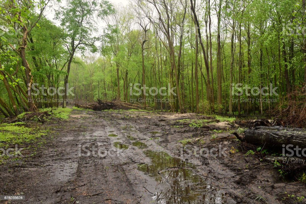 Construction Clearing Forest Road Along Pocomoke stock photo