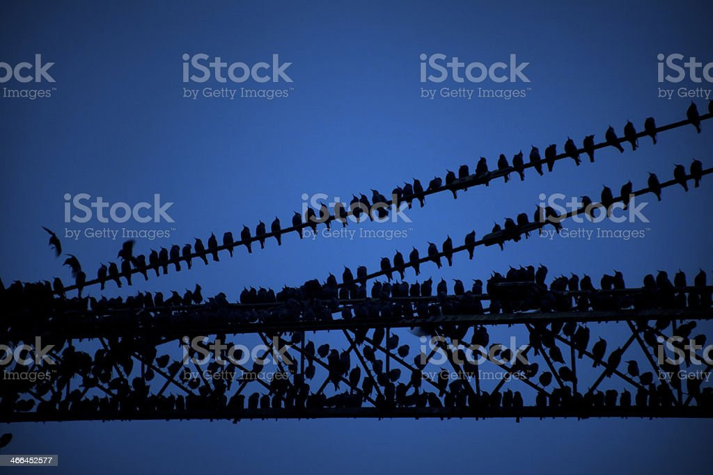 Construction crane and starlings royalty-free stock photo