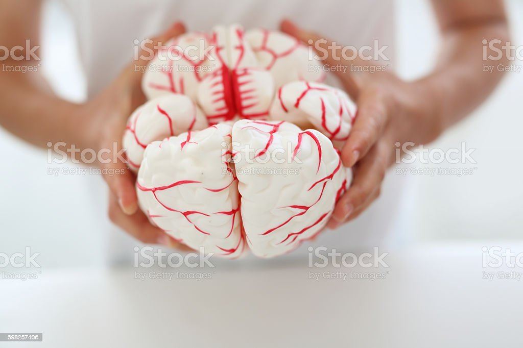 Construction of the brain. stock photo
